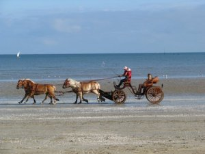 Horses on the beach in La Baule - photo by Yan Baczkowski
